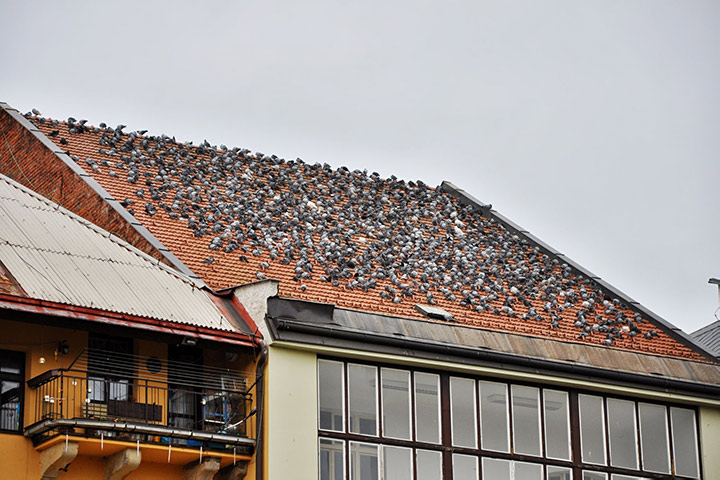A2B Pest Control are able to install spikes to deter birds from roofs in Kilburn.