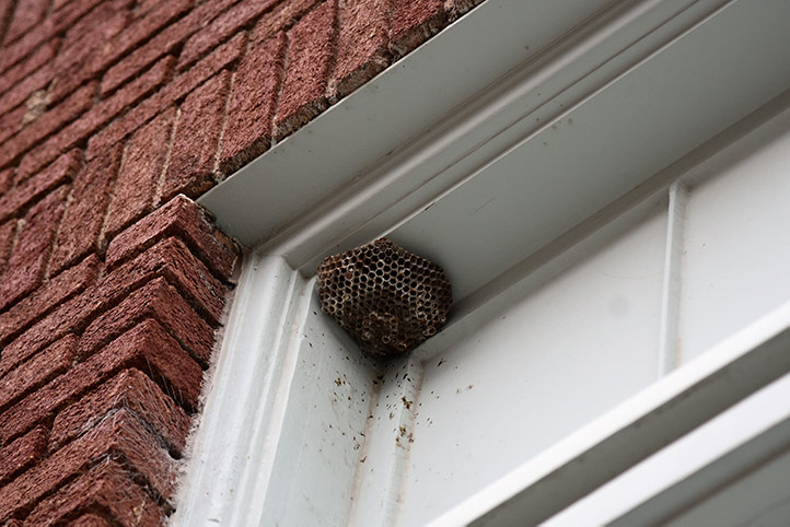 We provide a wasp nest removal service for domestic and commercial properties in Kilburn.